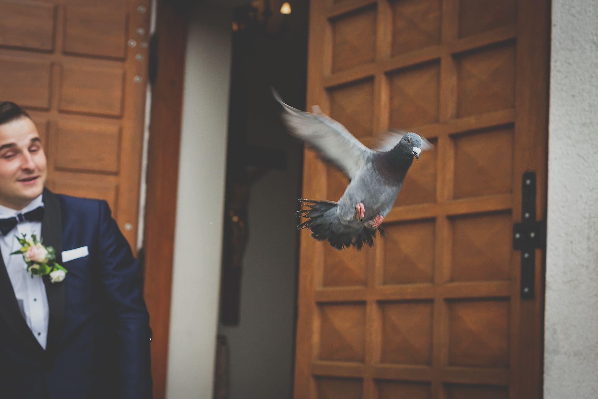 Wypuszczanie gołębi na ślubie